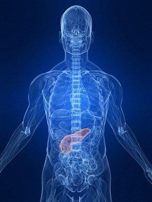What Organ Produces Insulin >> Pancreas Pain