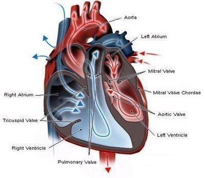 Symptoms Of Heart